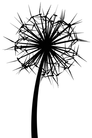 abstract mill: Dandelion from the wind generators  black and white version