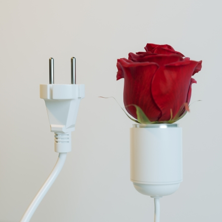 Socket With Roses Bulb  Conceptual Energy Picture  First Version Stock Photo - 23041785