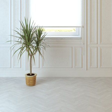idea comfortable: Empty living room design with Plant on the floor and window Stock Photo