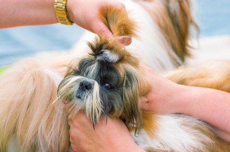 master: Haircut dogs professional master