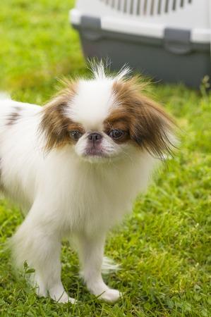 Small dog close-up