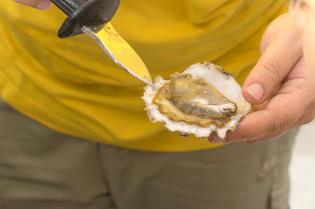 oyster from the sea close-up