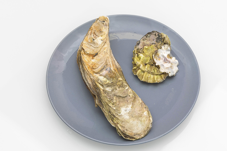 sea oyster in a closed sink on a plate, a nutritious healthy delicious food, a delicatessen and a Veggie food Stock Photo