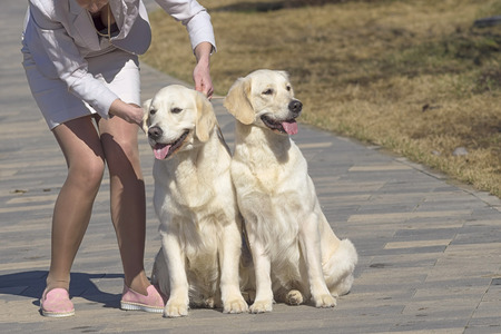 The hostess of two Labradors showed her beautiful breasts