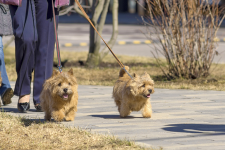 Two small dogs on leashes run along the path