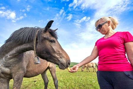 Blonde in a red T-shirt in the field feeds a horse with hands on a summer sunny day, shot at a wide angle from near Banco de Imagens
