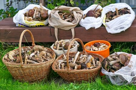 Baskets and pockets with mushrooms collected in the forest. Harvest of mushrooms on a background of green grass Reklamní fotografie