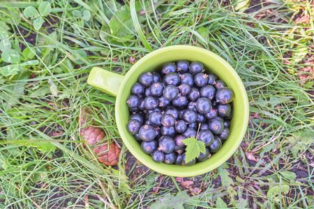 A cup with blackcurrant berries and a green leaf stands on the grass, top view, in the garden on a sunny summer day Foto de archivo - 134548927
