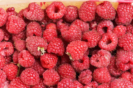 Background from a variety of red ripe raspberries. Close-up of berry harvest
