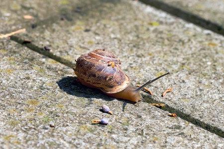A large snail with a house crawls on a stone slab Reklamní fotografie