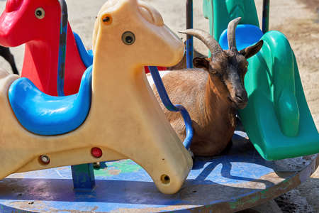 A mountain goat with long horns lies on a children carousel among plastic animal figures