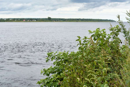 Bushes with green leaves on a background of water. Natural landscape with a lake Standard-Bild