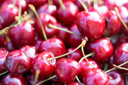 Lots of ripe red cherries in a plate Standard-Bild