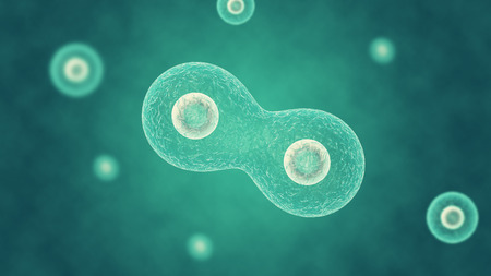 Two cells divide by osmosis, in the background other cells