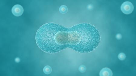 divides: Dos c�lulas se dividen por �smosis, en las otras c�lulas fondo