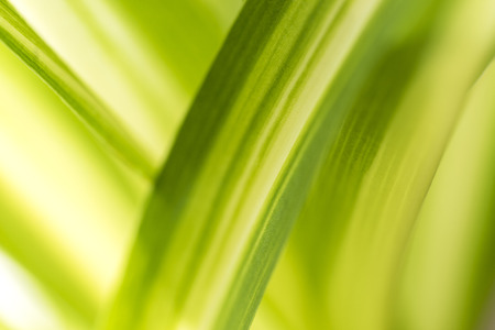 green environment: Abstract green nature blurred background with bright sunlight, flare and bokeh effect, use for backdrop or web design in environment concept