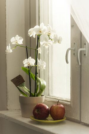 Home still life. White orchids in a flowerpot on a windowsill near an old window. Two red apples on a covered plate. High quality photo Foto de archivo