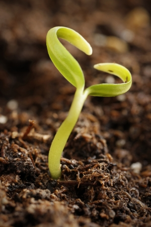 A small plant growing out in form of heart  photo