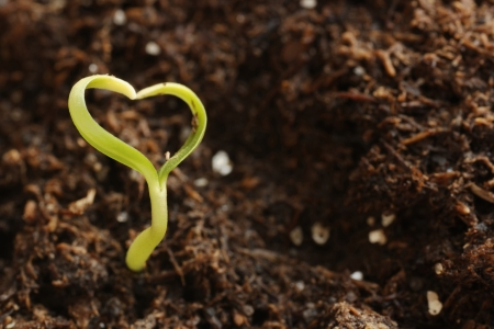 Young Green Heart-Shape Plant in the Soil. Macro  Stock Photo