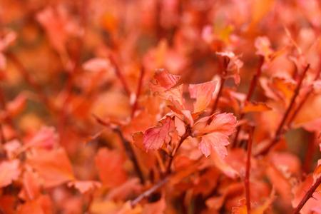 fall bush foliage Stock Photo