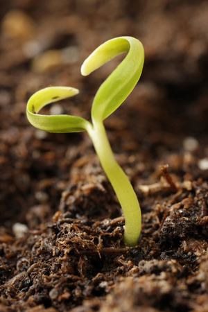 A small plant growing out in form of heart