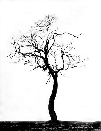 a dead tree Stock Photo