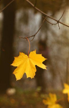 Last leaf Stock Photo