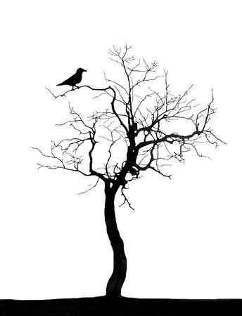 tree dead: Albero morto  Archivio Fotografico