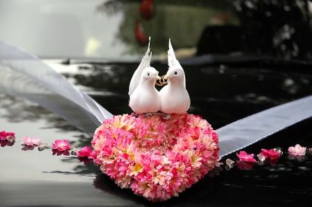 pigeons: Mariage ornements Banque d'images