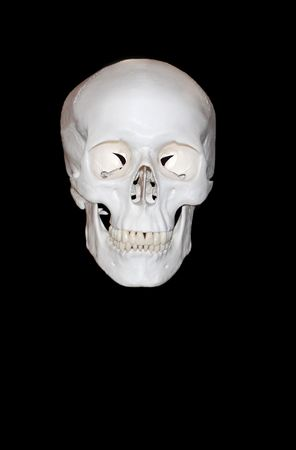 Educational  model of a skull of the person, Фото со стока