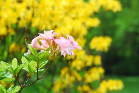 Spring to Baden-Baden. Pink flowers in the central park Stock Photo