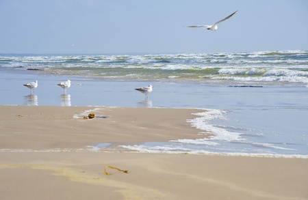 Seagulls at coast of Jurmala in windy weather Stock Photo