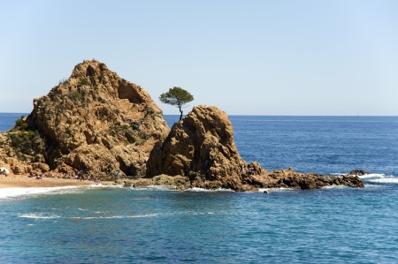 Spain  A pine on the rock at the coast Tossa de Mar