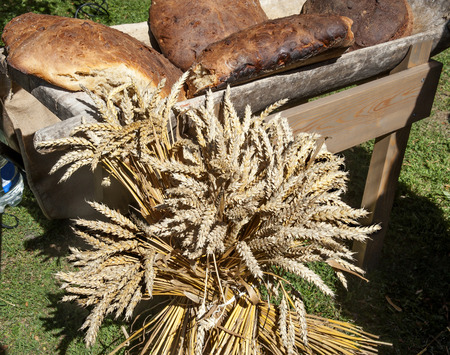 cultivo de trigo: Cultivos rural. Gavillas de trigo y el pan de campo horneado.