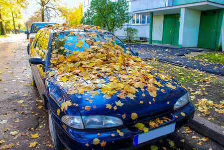 Multi-colored, autumn, maple leaves, on a car cowl.