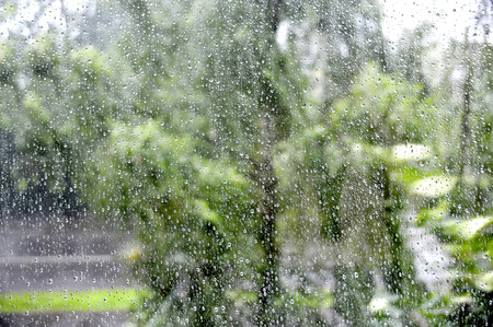 Transparent drops of a rain on a windowpane against the background of green leaves of trees