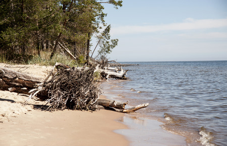 Europe, Latvia, cape Kolka, Gulf of Riga. The trees lie in water at the coast of the gulf.