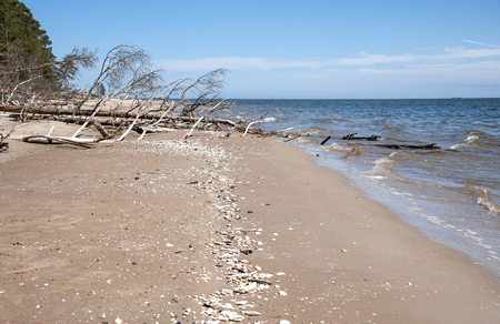 Europe, Kolka, Latvia. The fallen tree on the coast of the Gulf of Riga in the place of merge to the Baltic Sea