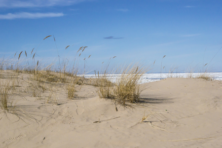 Dunes in the early spring in Jurmala on the coast of the Gulf of Riga