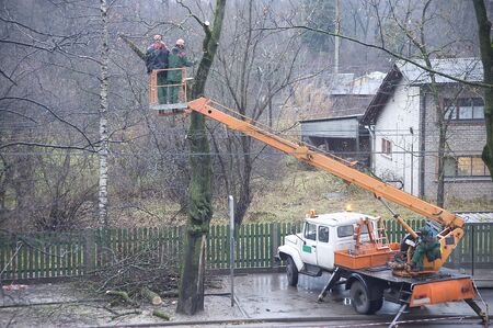 Cutting of branches of trees in the spring on a course of a trolleybus line