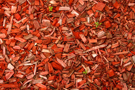 splinter: Wood chips and green stems.  Green stems sprouting through the red wood chips Stock Photo