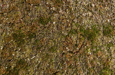 rotten: old rotten carpet sprouting moss. extreme close-up Stock Photo