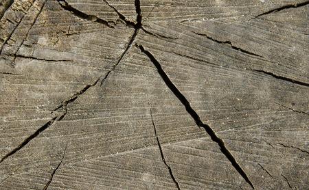 wood cut: Texture of old splintered wood cut. closeup.