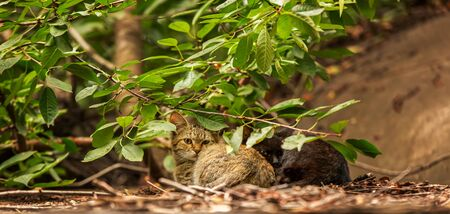 two kittens, black and color tabby huddled together lie on the ground in the growths of a tree.