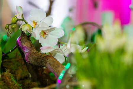 composition of a tree branch and a white orchid with highlights from lighting purple and green.