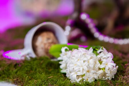 the decor is made of white hyacinth with highlights of purple lying on the grass in the foreground, and the bulb in the cup in the background is out of focus. 스톡 콘텐츠