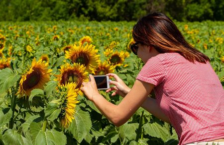 Young girl photographed smartphone sunflower. Day, a field of sunflowers. 스톡 콘텐츠