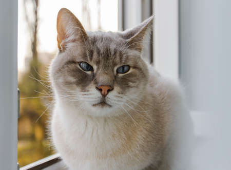 gray cat sits on a window frame near an open window and looks to the side. close-up