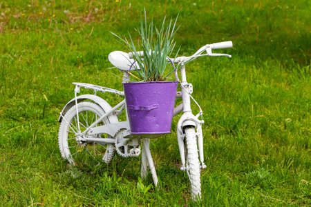 an old children's bike painted white and used in the street flowerbed as a flower pot holder. reuse of things, the second life of a bicycle.