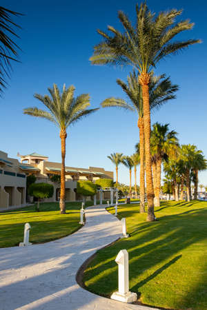 Coral Sea Holiday Resort, Sinai, Egypt - February 19, 2021. paths, beautiful palm trees and a green lawn in the rays of the sunset. evening, winter